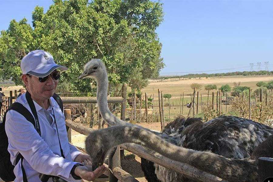 Cape-Town-Ostrich-Ranch-2